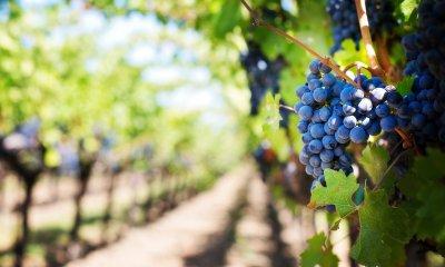 Les vins de Châteauneuf-de-Gadagne